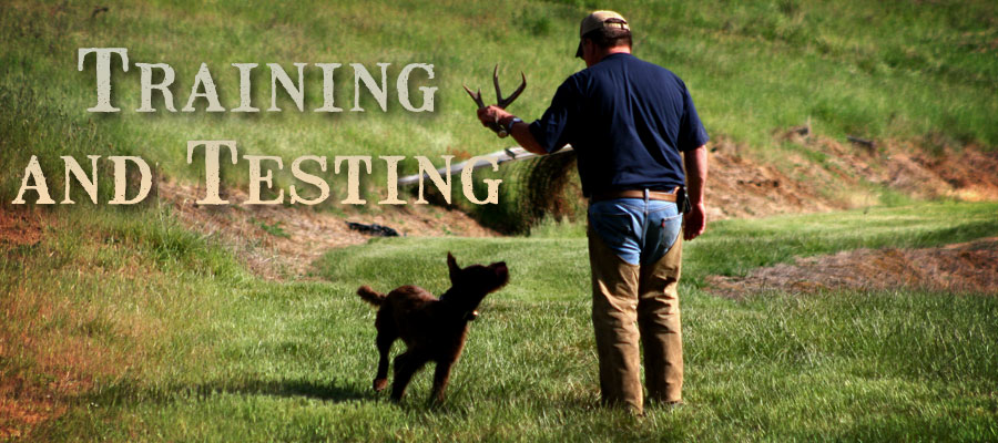 Pudelpointer Training and Testing